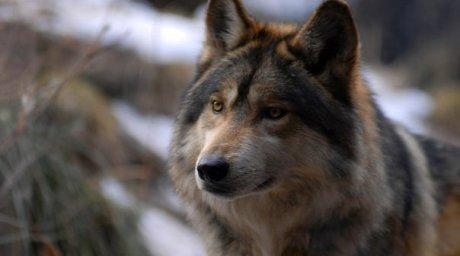 http://wolvescorporation.rolka.su/files/0014/f1/98/77283.jpg